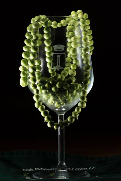Sagra dei bisi 2018 a Colognola ai Colli, il Pisello Verdone Nano trabocca come lo champagne